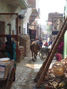 mohali-street-p1040791
